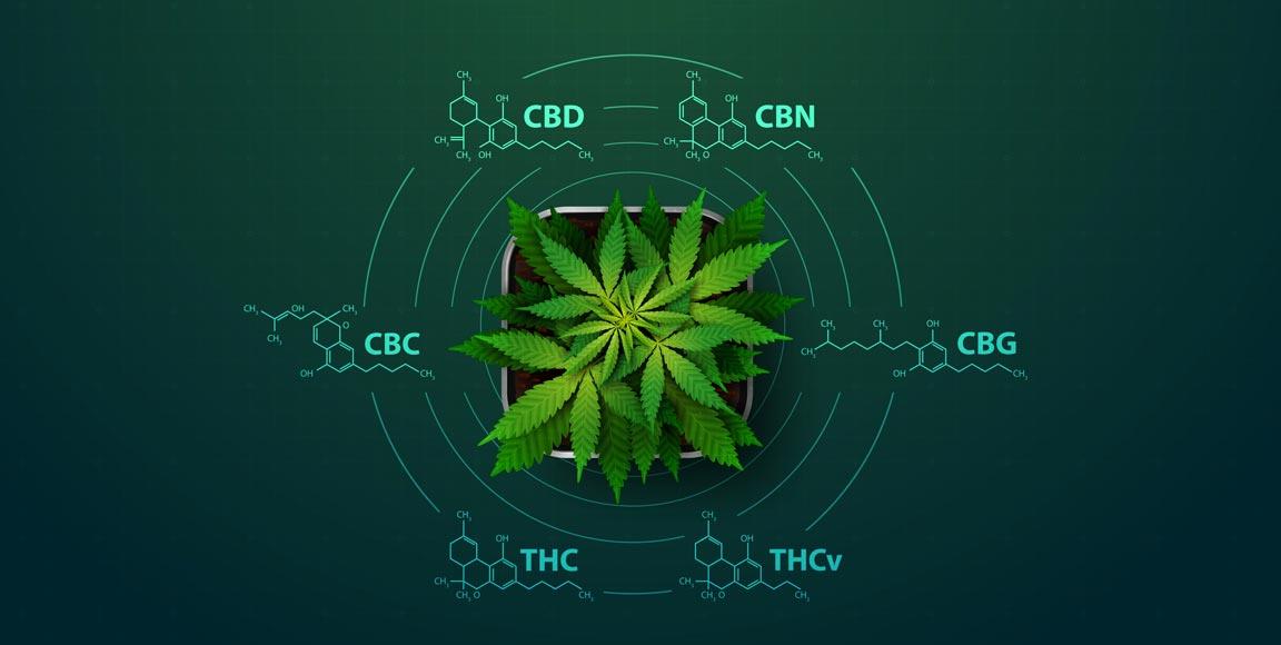 Układ endokannabinoidowy ECS – klucz do zrozumienia skuteczności oleju CBD